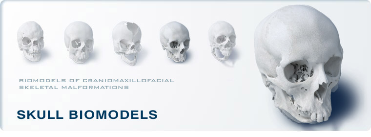 Skull Biomodels